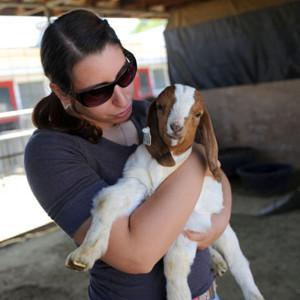 Lambing Kidding Assistance